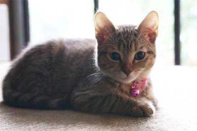 Kitty2_2