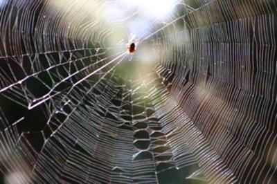 Spider_weba