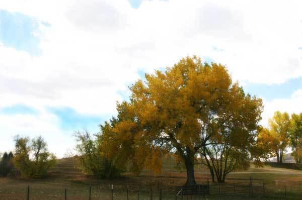 Treesmall_1